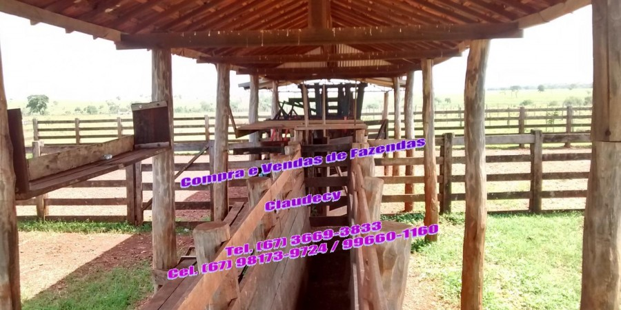 FAZENDA  EM PARANAÍBA  MS - Foto 11 de 12