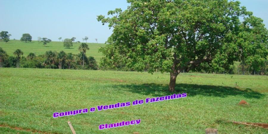 FAZENDA  EM PARANAÍBA  MS - Foto 4 de 12