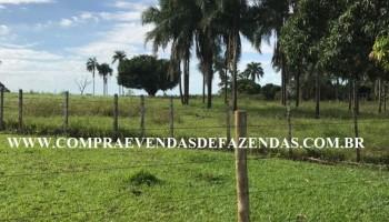 FAZENDA  APARECIDA TABOADO MS