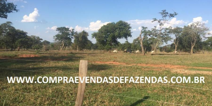 FAZENDA INOCÊNCIA MS  - Foto 1 de 30