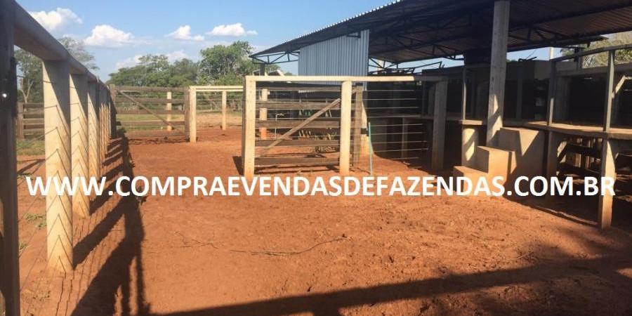 FAZENDA INOCÊNCIA MS  - Foto 21 de 30
