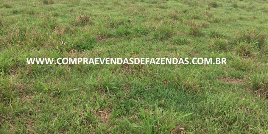 FAZENDA INOCÊNCIA MS  - Foto 10 de 30