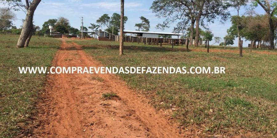 FAZENDA INOCÊNCIA MS  - Foto 11 de 30