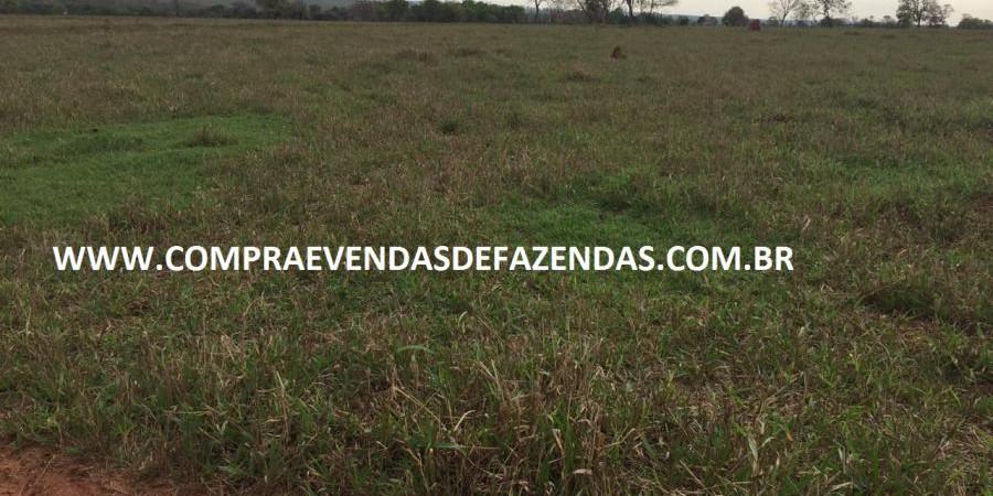FAZENDA INOCÊNCIA MS  - Foto 12 de 30