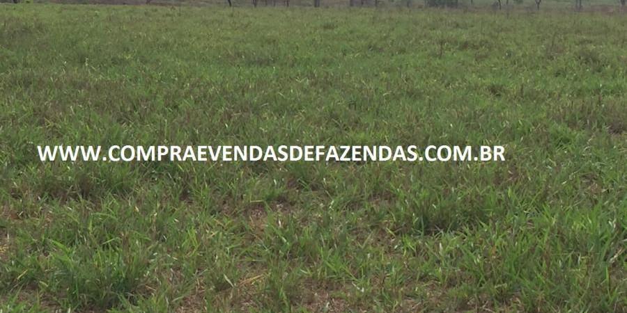 FAZENDA INOCÊNCIA MS  - Foto 15 de 30