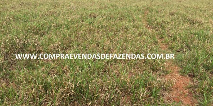 FAZENDA INOCÊNCIA MS  - Foto 16 de 30