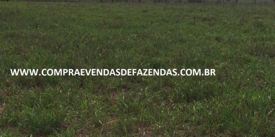 FAZENDA INOCÊNCIA MS  - Foto 17 de 30
