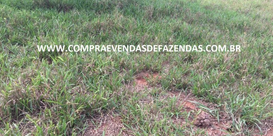 FAZENDA INOCÊNCIA MS  - Foto 2 de 30