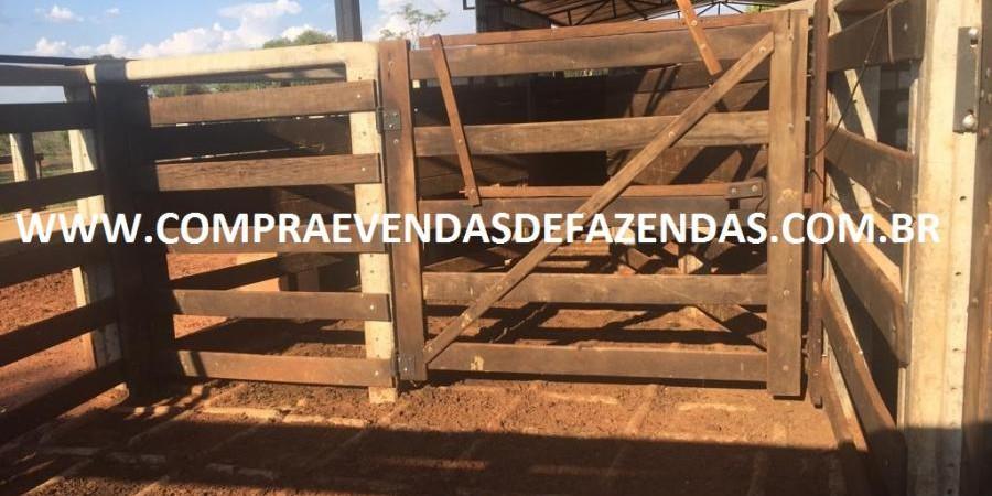 FAZENDA INOCÊNCIA MS  - Foto 22 de 30