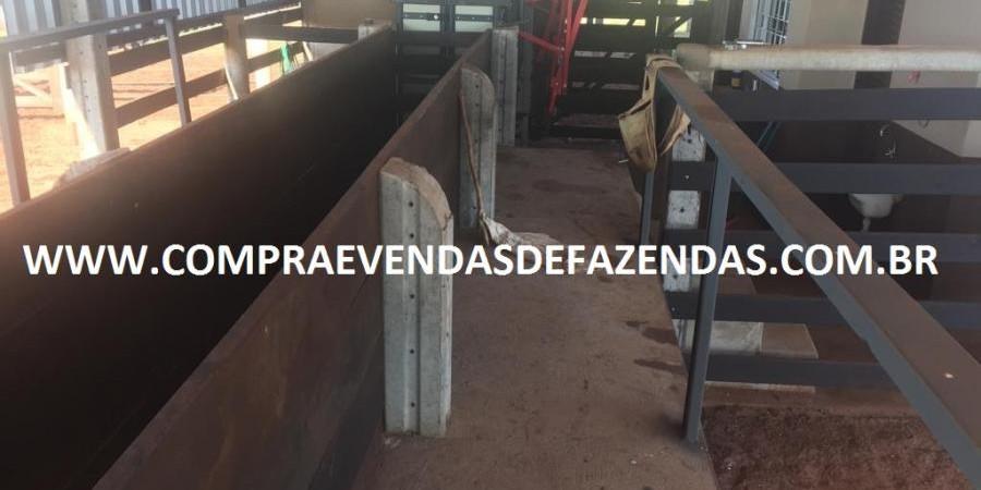 FAZENDA INOCÊNCIA MS  - Foto 23 de 30