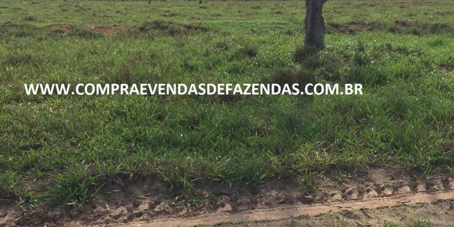 FAZENDA INOCÊNCIA MS  - Foto 4 de 30