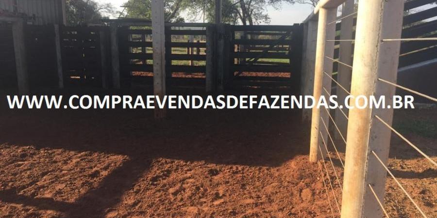 FAZENDA INOCÊNCIA MS  - Foto 24 de 30