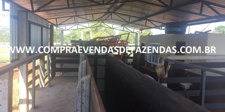 FAZENDA INOCÊNCIA MS  - Foto 25 de 30