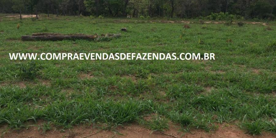 FAZENDA INOCÊNCIA MS  - Foto 7 de 30