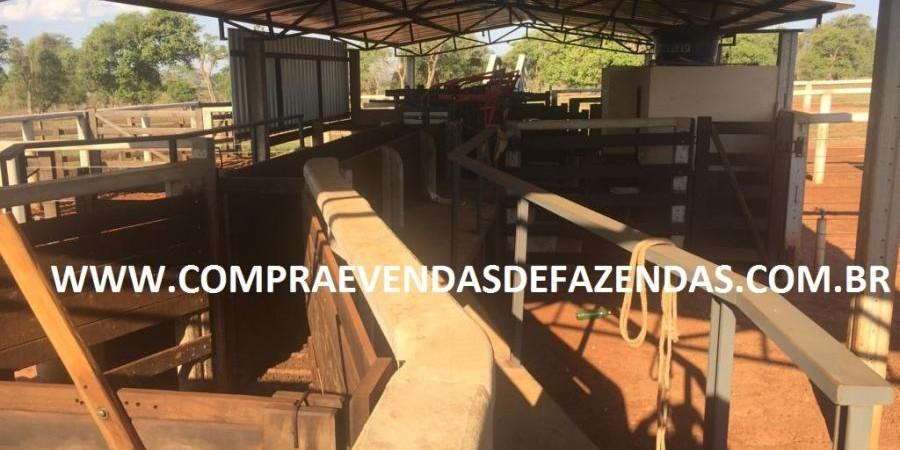 FAZENDA INOCÊNCIA MS  - Foto 27 de 30