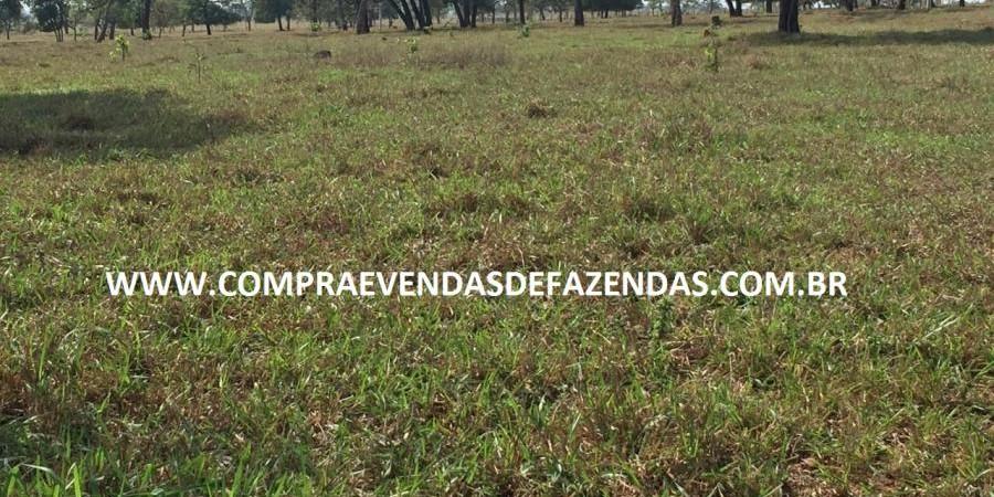 FAZENDA INOCÊNCIA MS  - Foto 9 de 30