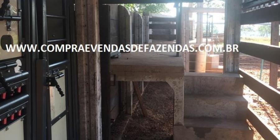 FAZENDA INOCÊNCIA MS  - Foto 29 de 30