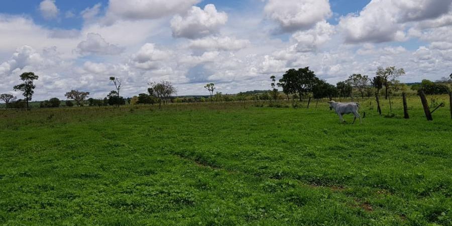 FAZENDA INOCÊNCIA MS  - Foto 13 de 19