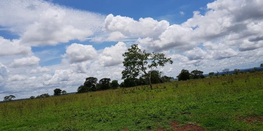 FAZENDA INOCÊNCIA MS  - Foto 5 de 19