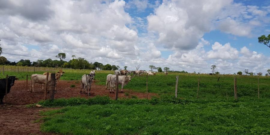 FAZENDA INOCÊNCIA MS  - Foto 6 de 19