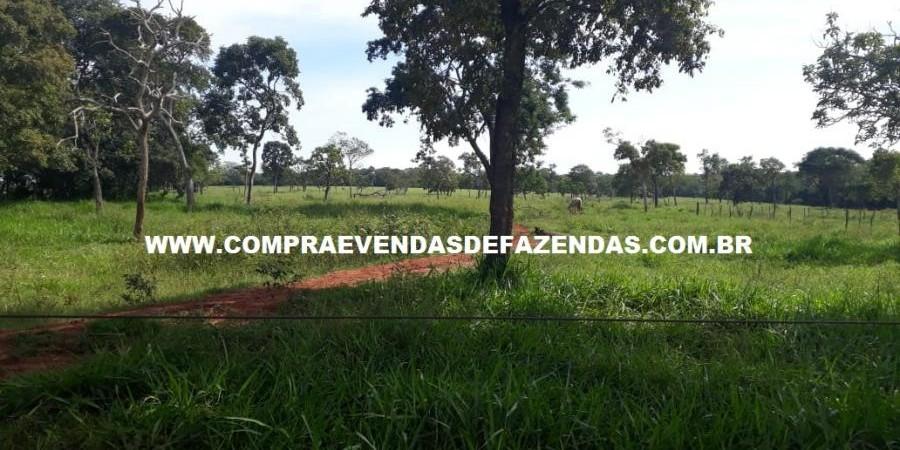 FAZENDA À VENDA REGIÃO DE PARANAÍBA MS  - Foto 1 de 27