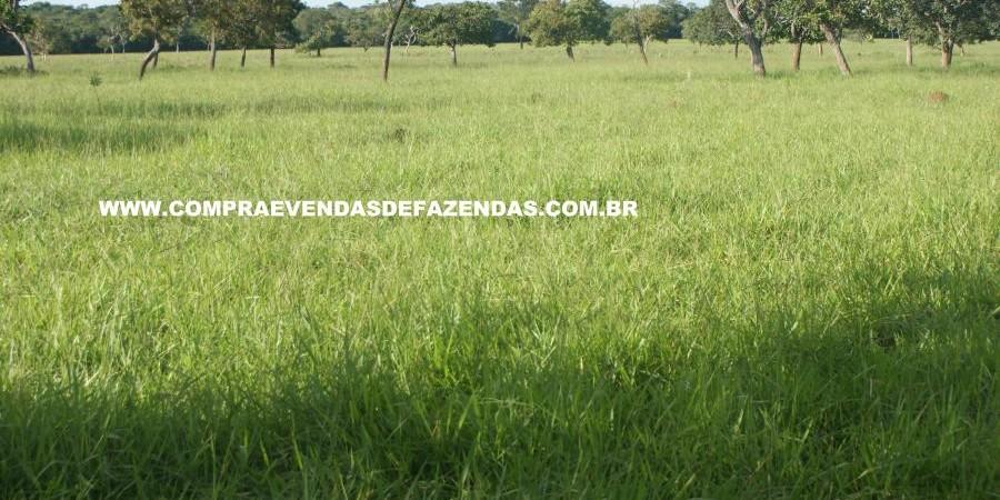 FAZENDA À VENDA REGIÃO DE PARANAÍBA MS  - Foto 21 de 27