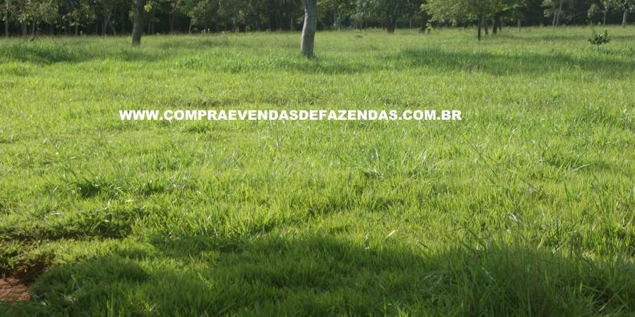 FAZENDA À VENDA REGIÃO DE PARANAÍBA MS  - Foto 10 de 27