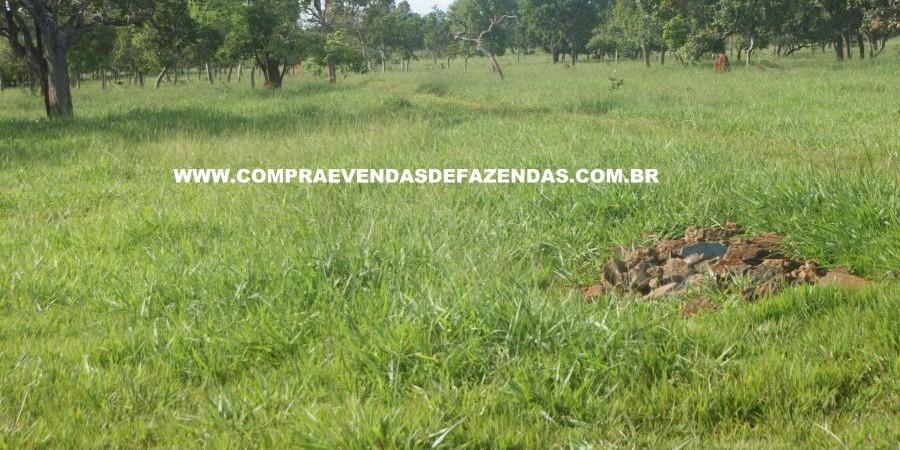 FAZENDA À VENDA REGIÃO DE PARANAÍBA MS  - Foto 11 de 27