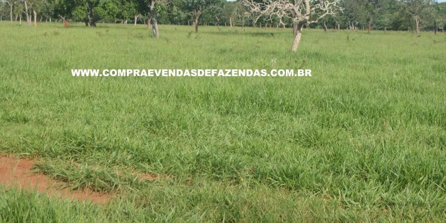 FAZENDA À VENDA REGIÃO DE PARANAÍBA MS  - Foto 12 de 27