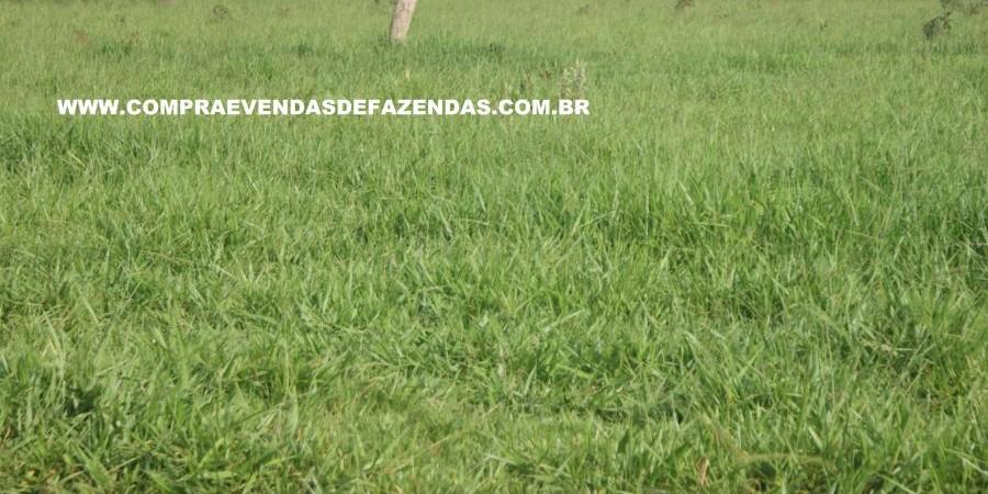FAZENDA À VENDA REGIÃO DE PARANAÍBA MS  - Foto 16 de 27