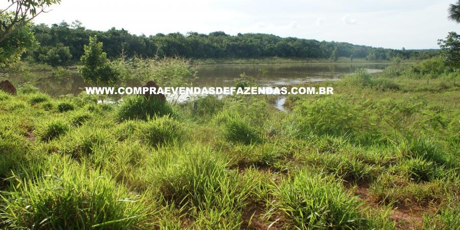 FAZENDA À VENDA REGIÃO DE PARANAÍBA MS  - Foto 18 de 27
