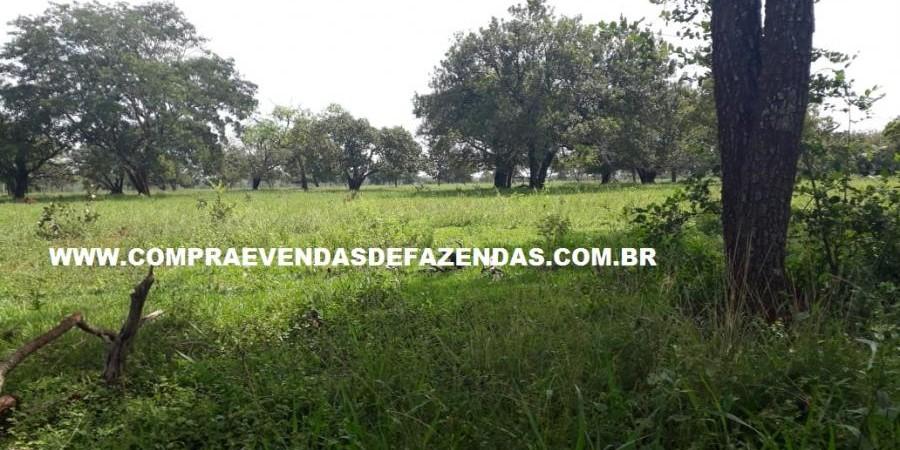 FAZENDA À VENDA REGIÃO DE PARANAÍBA MS  - Foto 2 de 27