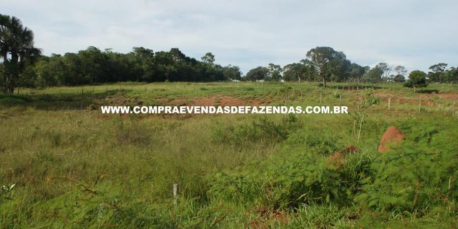 FAZENDA À VENDA REGIÃO DE PARANAÍBA MS  - Foto 20 de 27