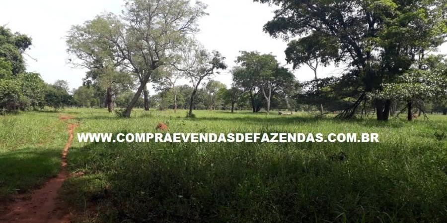 FAZENDA À VENDA REGIÃO DE PARANAÍBA MS  - Foto 3 de 27