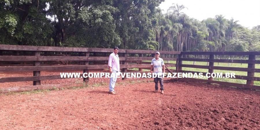 FAZENDA À VENDA REGIÃO DE PARANAÍBA MS  - Foto 4 de 27
