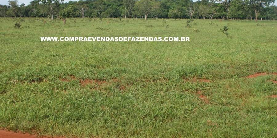 FAZENDA À VENDA REGIÃO DE PARANAÍBA MS  - Foto 8 de 27