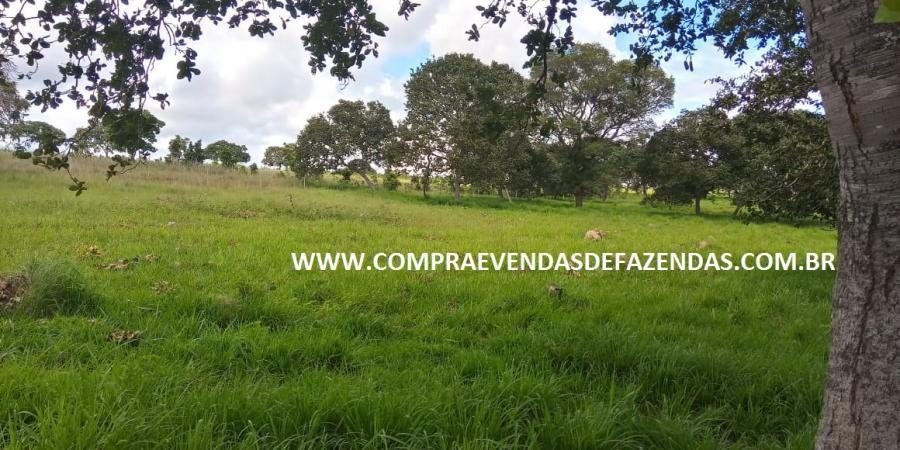 FAZENDA À  VENDA  TORIXORÉU MT - Foto 12 de 20