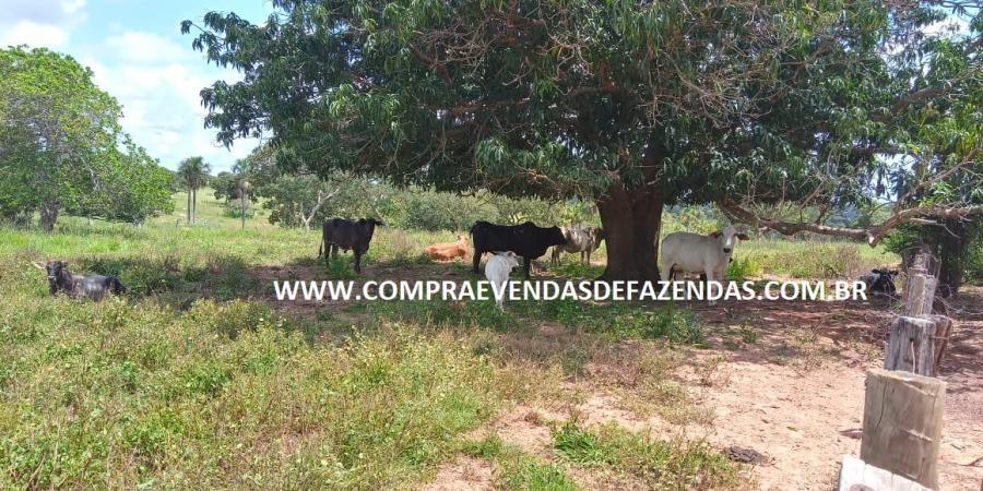 FAZENDA À  VENDA  TORIXORÉU MT - Foto 3 de 20