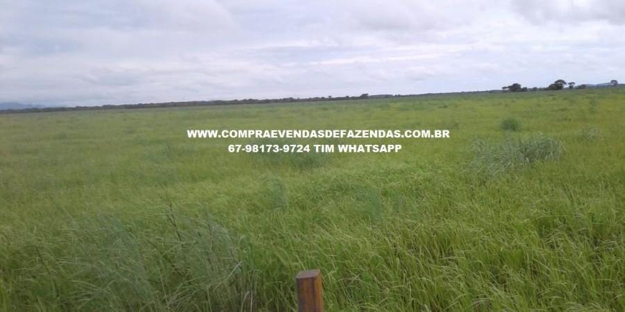 FAZENDA À VENDA CORUMBÁ  - Foto 4 de 11