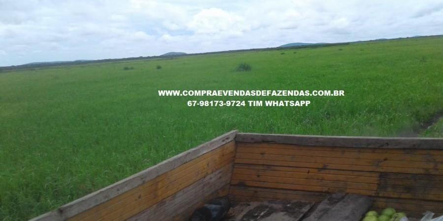 FAZENDA À VENDA CORUMBÁ  - Foto 6 de 11
