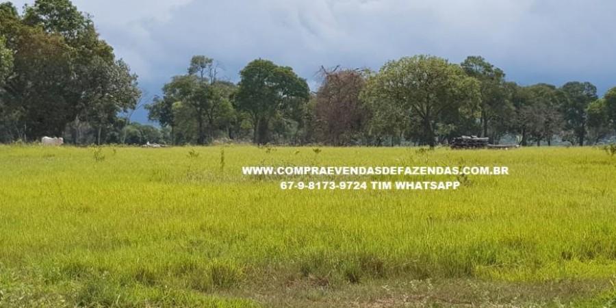 FAZENDA À VENDA RIO NEGRO   - Foto 33 de 60