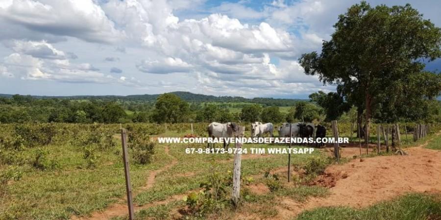 FAZENDA À VENDA RIO NEGRO   - Foto 24 de 60