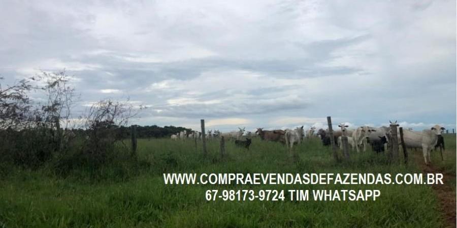 FAZENDA A VENDA SERRANÓPOLIS GO - Foto 5 de 9