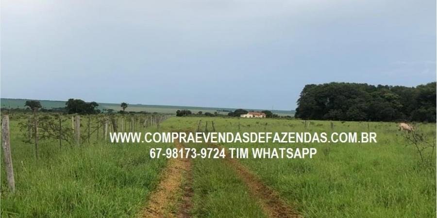 FAZENDA A VENDA SERRANÓPOLIS GO - Foto 6 de 9