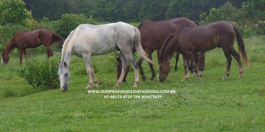 FAZENDA A VENDA  PONTAL DO ARAGUAIA MT - Foto 10 de 20