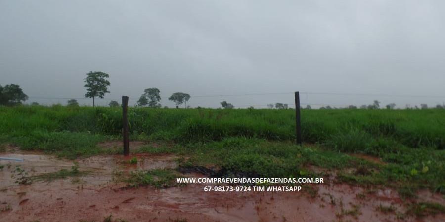 FAZENDA A VENDA  PONTAL DO ARAGUAIA MT - Foto 13 de 20