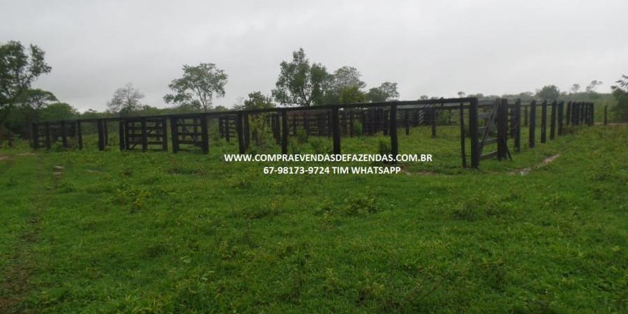 FAZENDA A VENDA  PONTAL DO ARAGUAIA MT - Foto 16 de 20