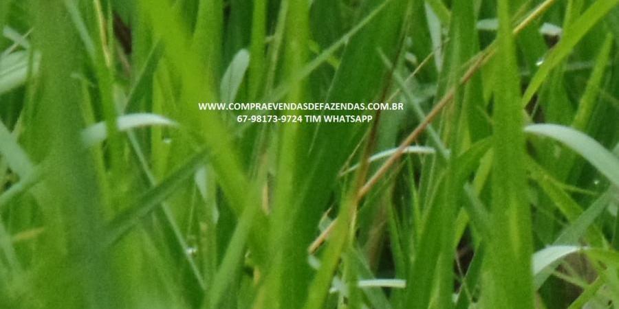 FAZENDA A VENDA  PONTAL DO ARAGUAIA MT - Foto 2 de 20