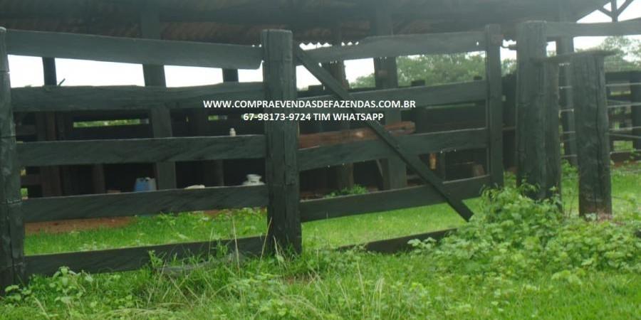 FAZENDA A VENDA  PONTAL DO ARAGUAIA MT