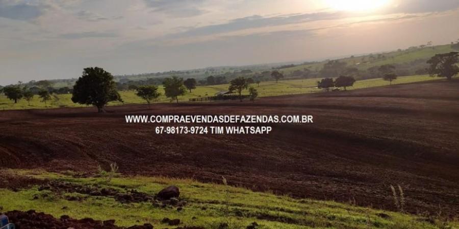 FAZENDA À VENDA CASSILÂNDIA – MS - Foto 2 de 10
